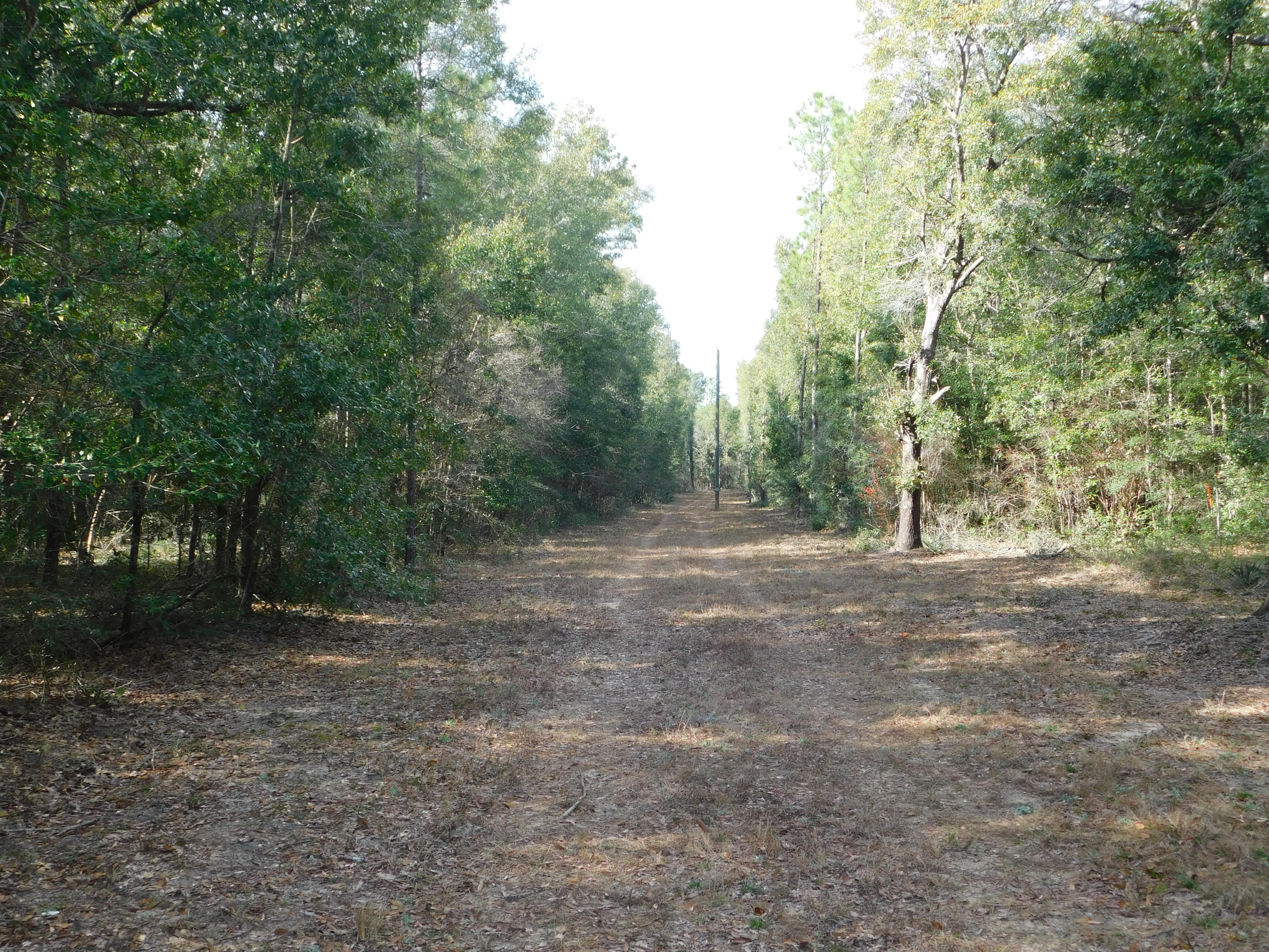 Photo of home for sale at 1.8 AC Wilkerson Bluff, Holt FL