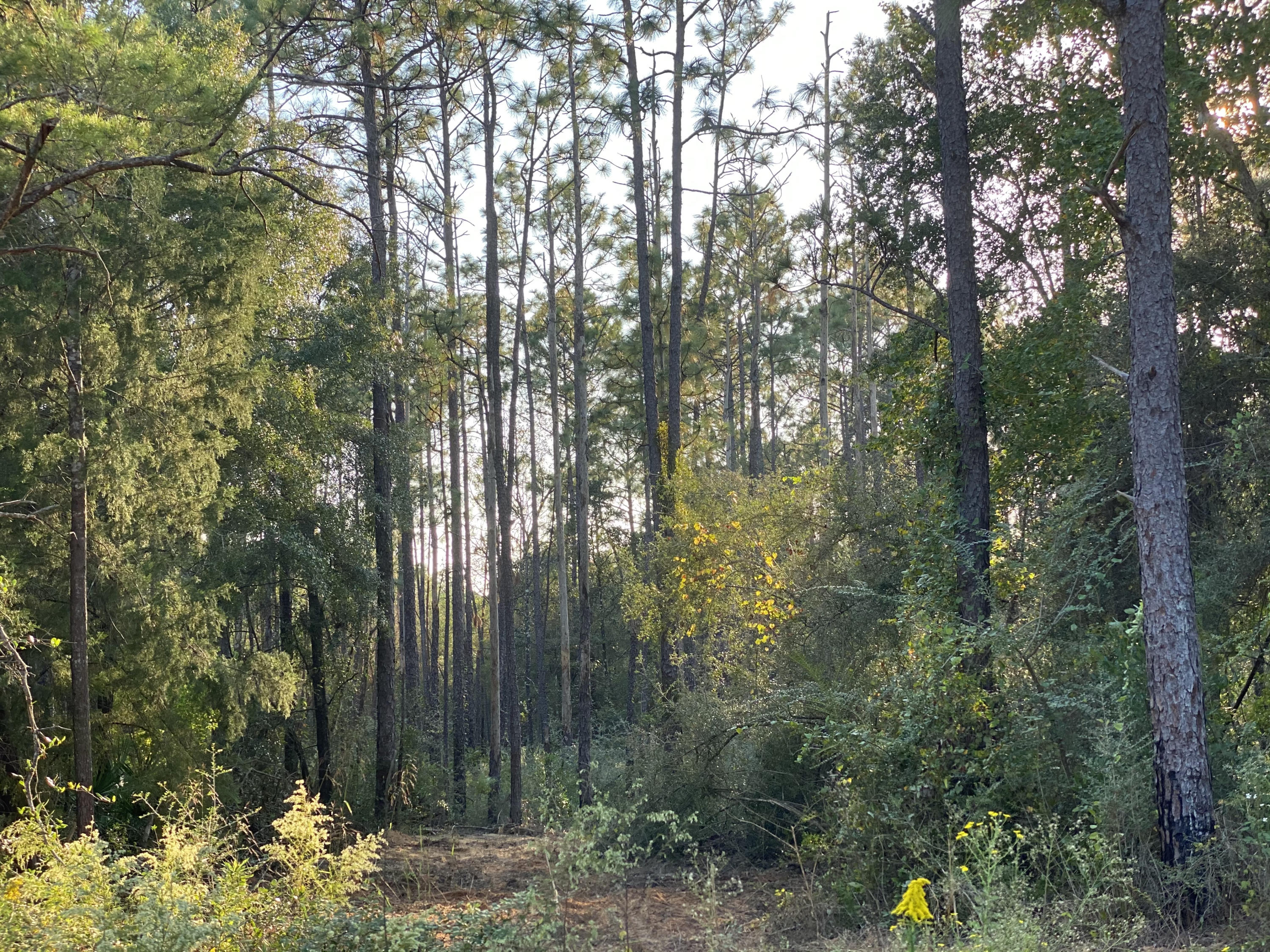 Photo of home for sale at 0000 Caswell, Defuniak Springs FL