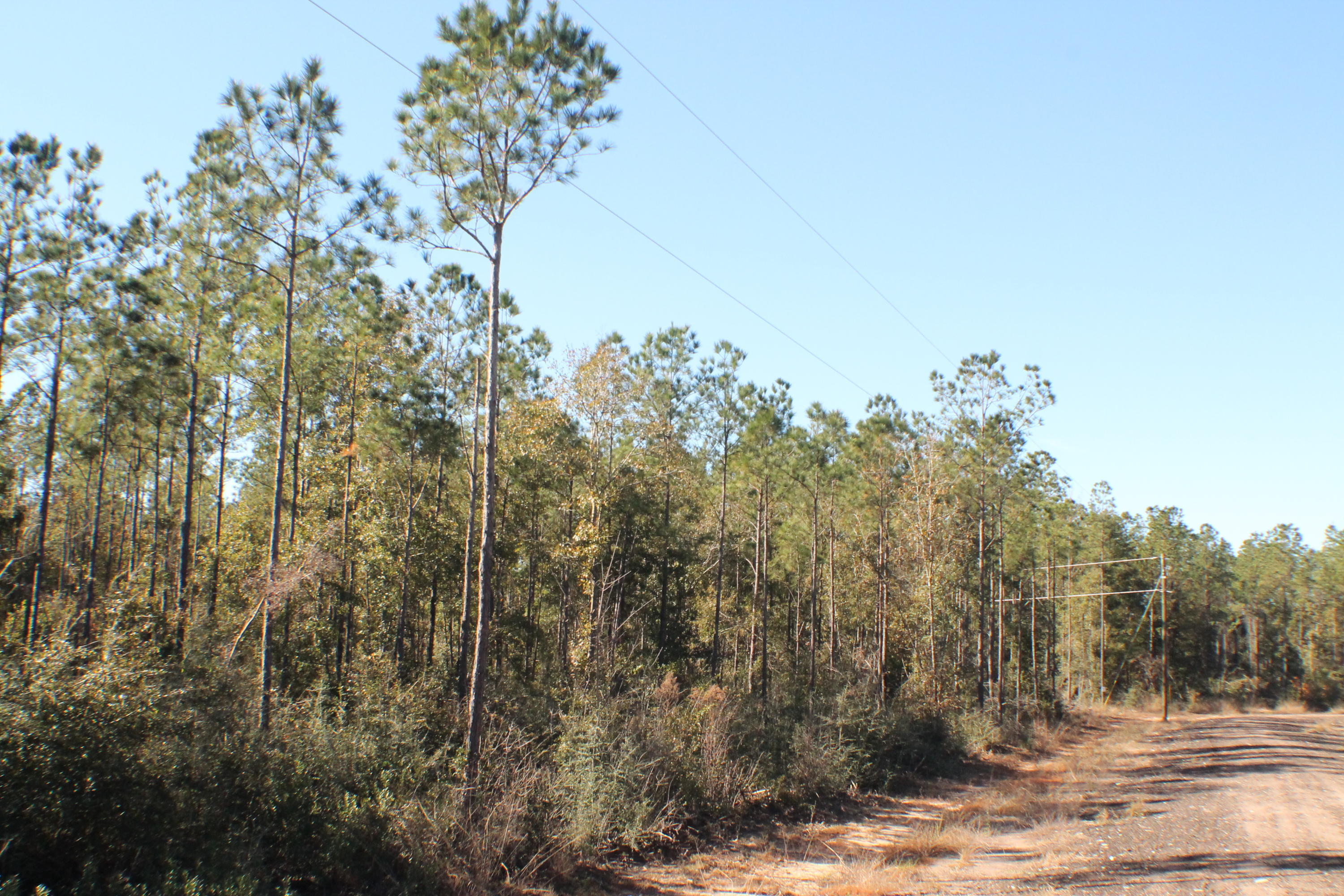 Photo of home for sale at Lot 8 Forest Hills, Milton FL