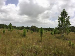 Land for Sale at Pratt Whitney Road Hobe Sound, Florida 33455 United States