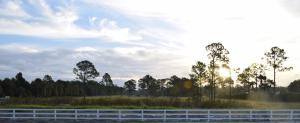 Loxahatchee Groves