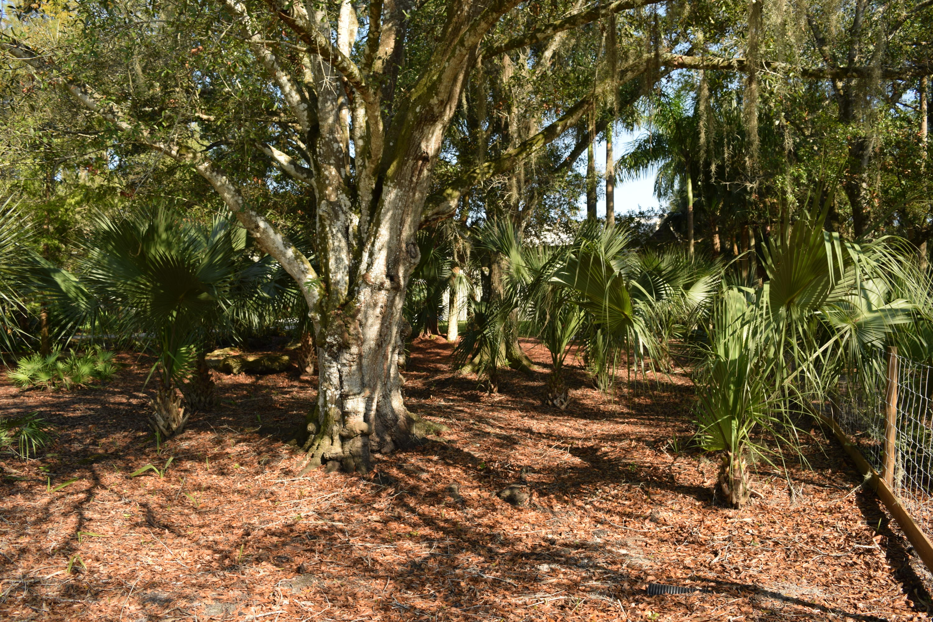 PALM CITY FARMS PROPERTY