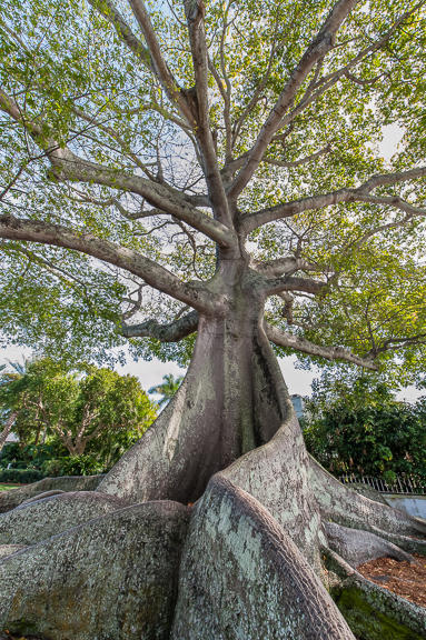 1900 Consulate Place 2001 West Palm Beach, FL 33401 photo 33