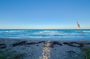 Sand Dollar Shores