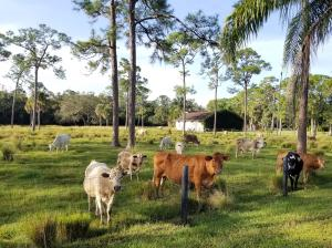 20000  Mack Dairy Rd Road , Jupiter FL 33478 is listed for sale as MLS Listing RX-10478291 photo #14