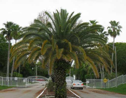 5130 Las Verdes Circle 219 Delray Beach, FL 33484 photo 53