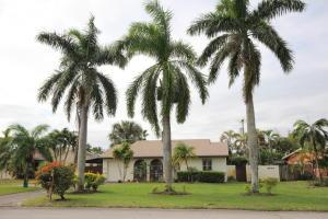 Tropic Palms