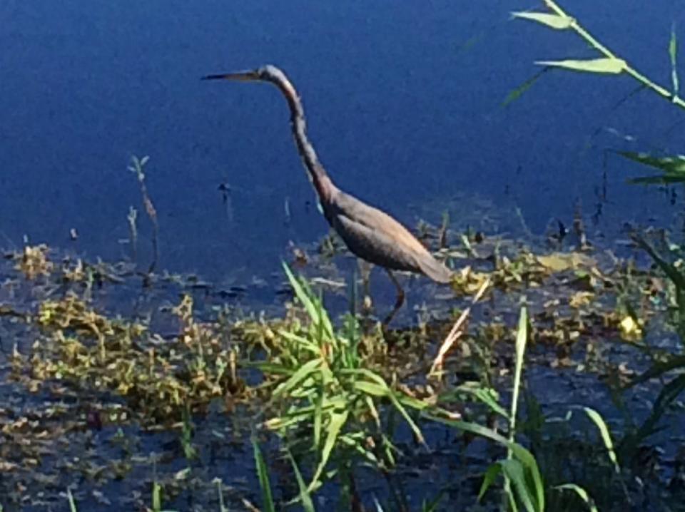 702 Wright Drive Lake Worth, FL 33461 photo 23