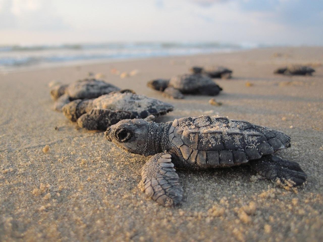 MIDTOWN PALM BEACH GARDENS FLORIDA