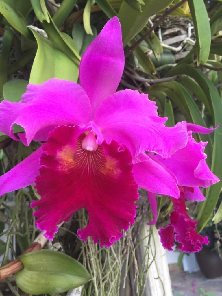 2165 Vero Beach Lane West Palm Beach, FL 33411 photo 38