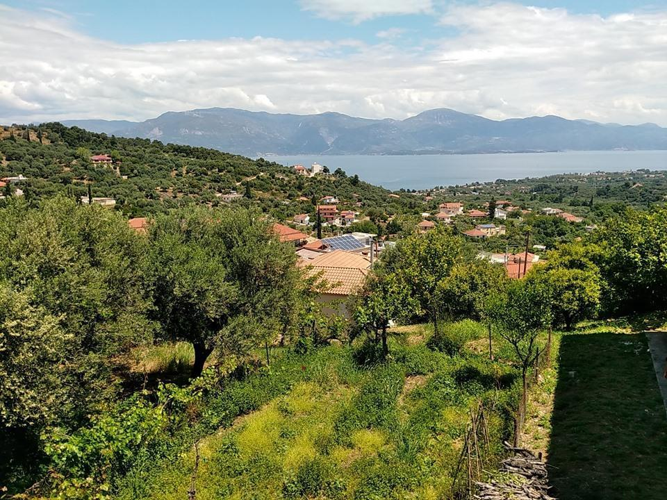 1 Aigio Ziria Greece 25009 - 00000 - Out of Country - Out of Country