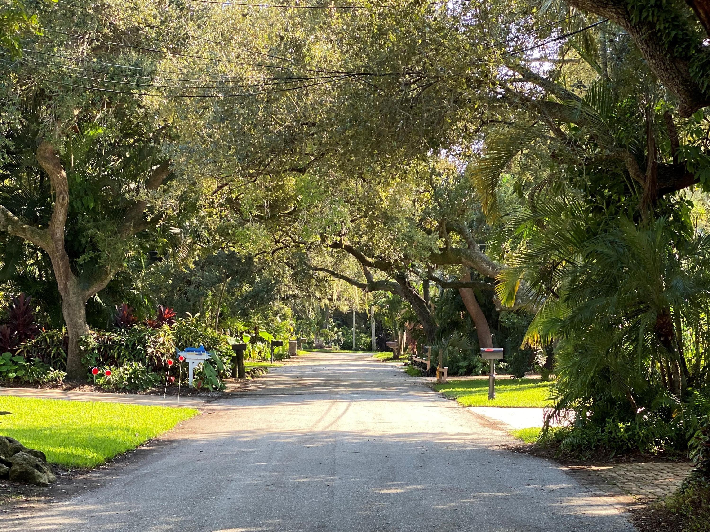 Oak Tree Canopy Street