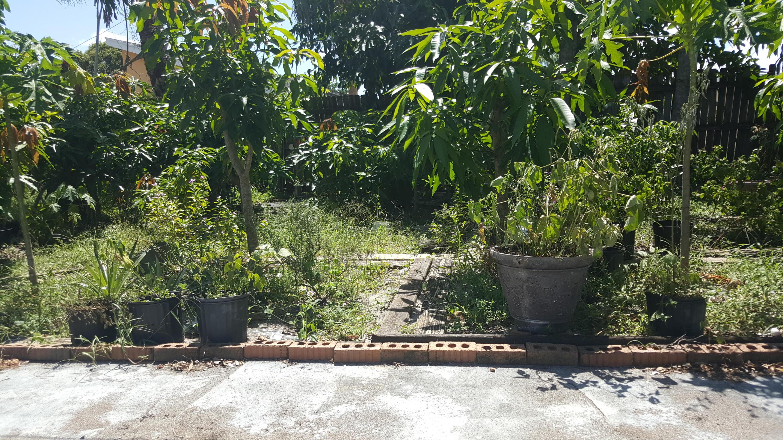 Fruit Tree at back yard