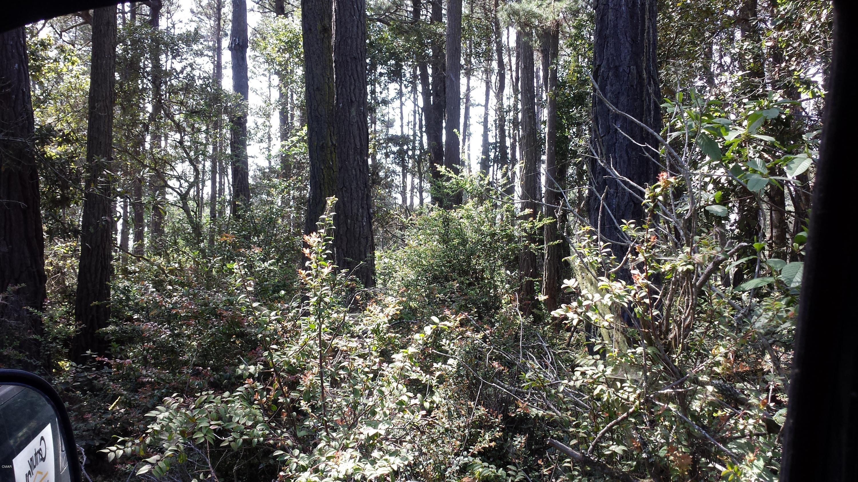 This 6.26 acre bare land is grown in with dense shrubbery for a private home building site. Country feel though close to Fort Bragg and Mendocino. This sunny parcel in the coastal zone is priced to sell.