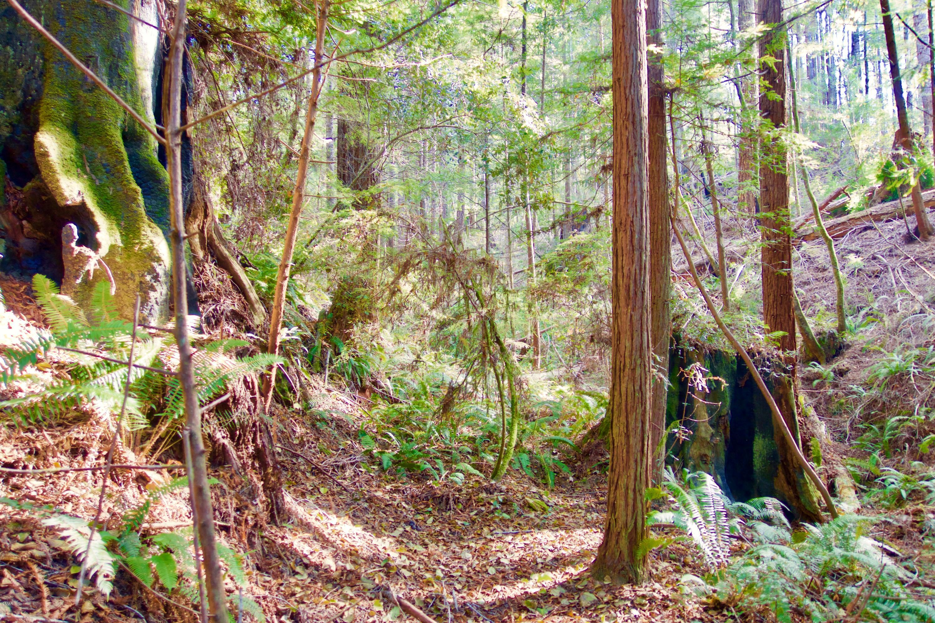 10 acre forest land parcel located in the sunbelt area about 4 miles inland from the Fort Bragg coast. Mostly wooded with redwoods, doug fir, madrones and more. A seasonal creek and fern groves are also present. Turn off from Highway 20 and follow the lane north to the property. There is a combination of gentle, steep and level areas and some marketable timber may be present.