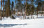 Winter sunny lot5