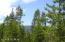 Plenty of Healthy Mature Trees