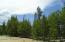 Abundant New Tree Growth