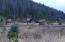 Elk Bugling in the Park