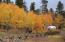 Aspen Forest Autumn