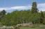 Aspen Forest Summer