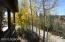 Aspen grove view 1