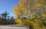 Aspen grove view 2