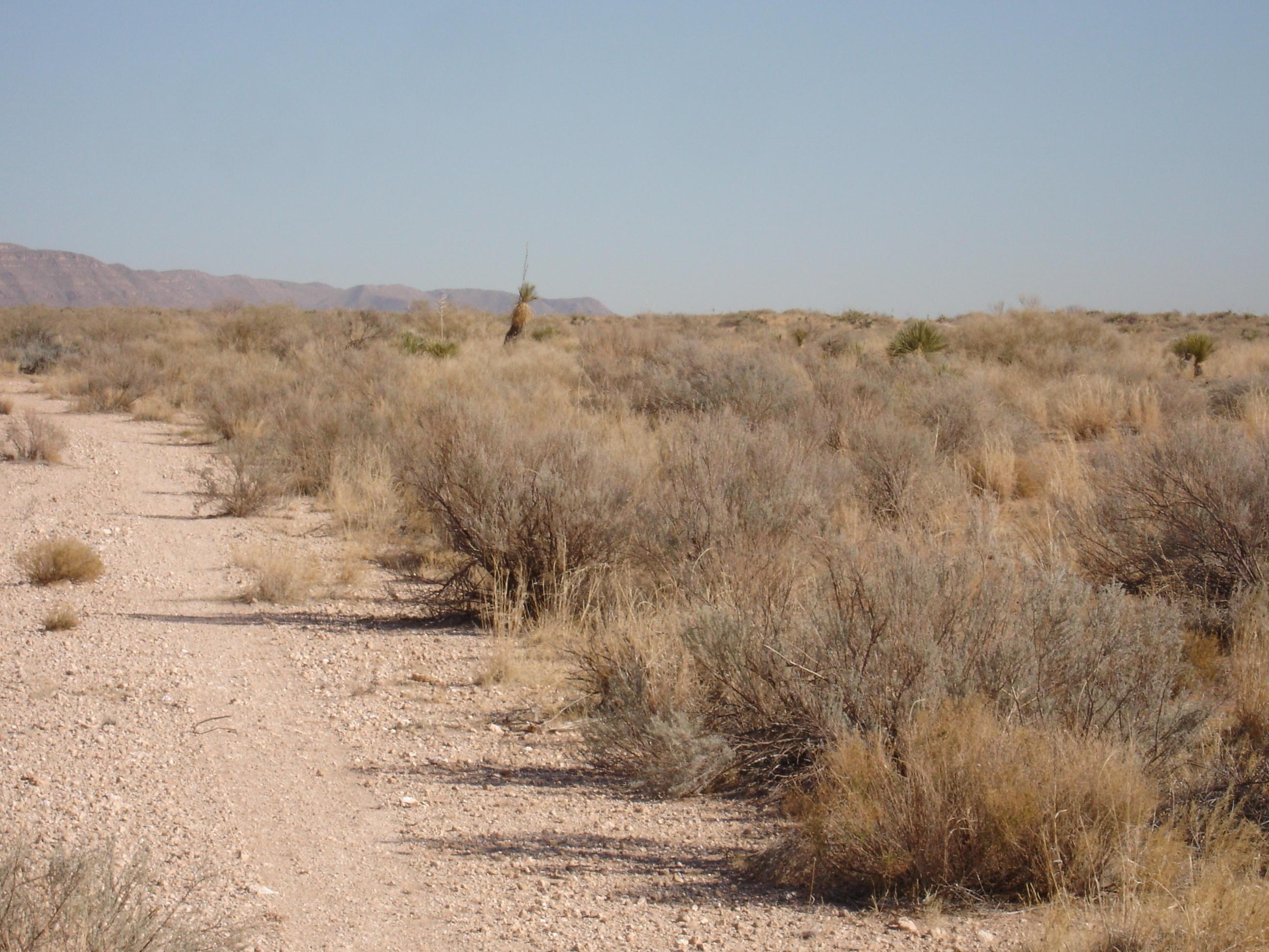 0 Quae Avenue, Unincorporated, Texas 99999, ,Land,For sale,Quae,807837