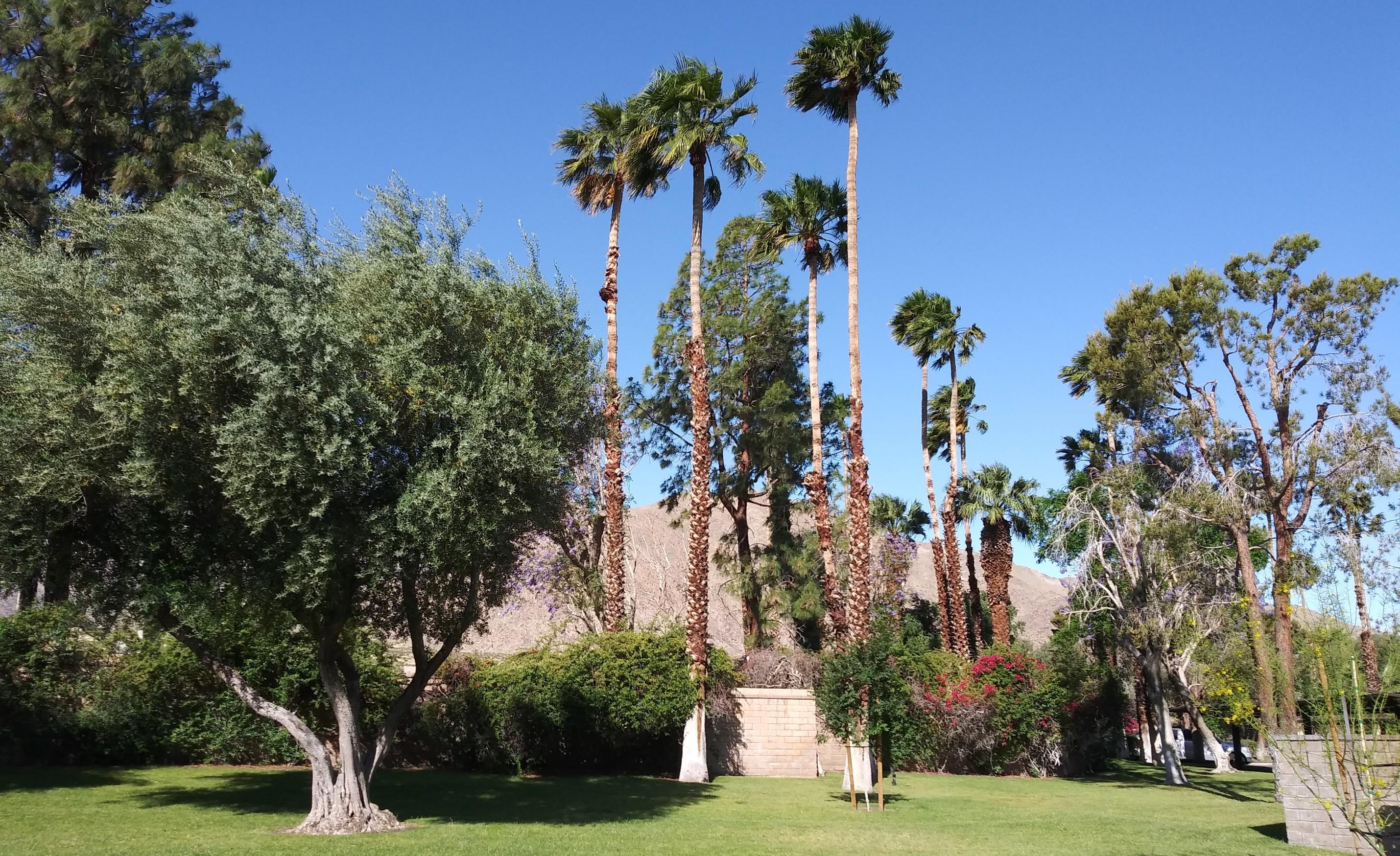 Photo of 701 N Los Felices Circle #108, Palm Springs, CA 92262