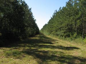 00 ANNER Rd., Picayune, MS 39426