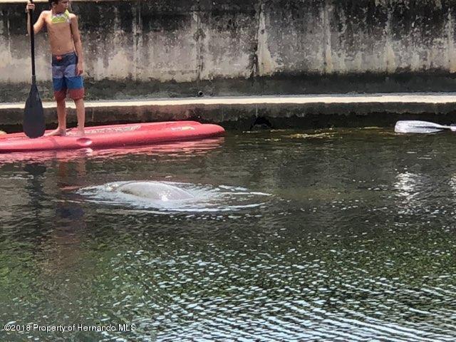 Kayaker & Manatee