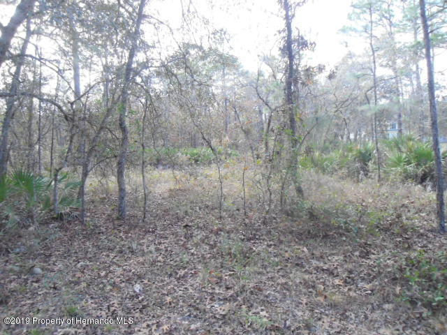 16455 Kids Avenue, Weeki Wachee, Florida 34614, ,Vacant land,For Sale,Kids,2206050