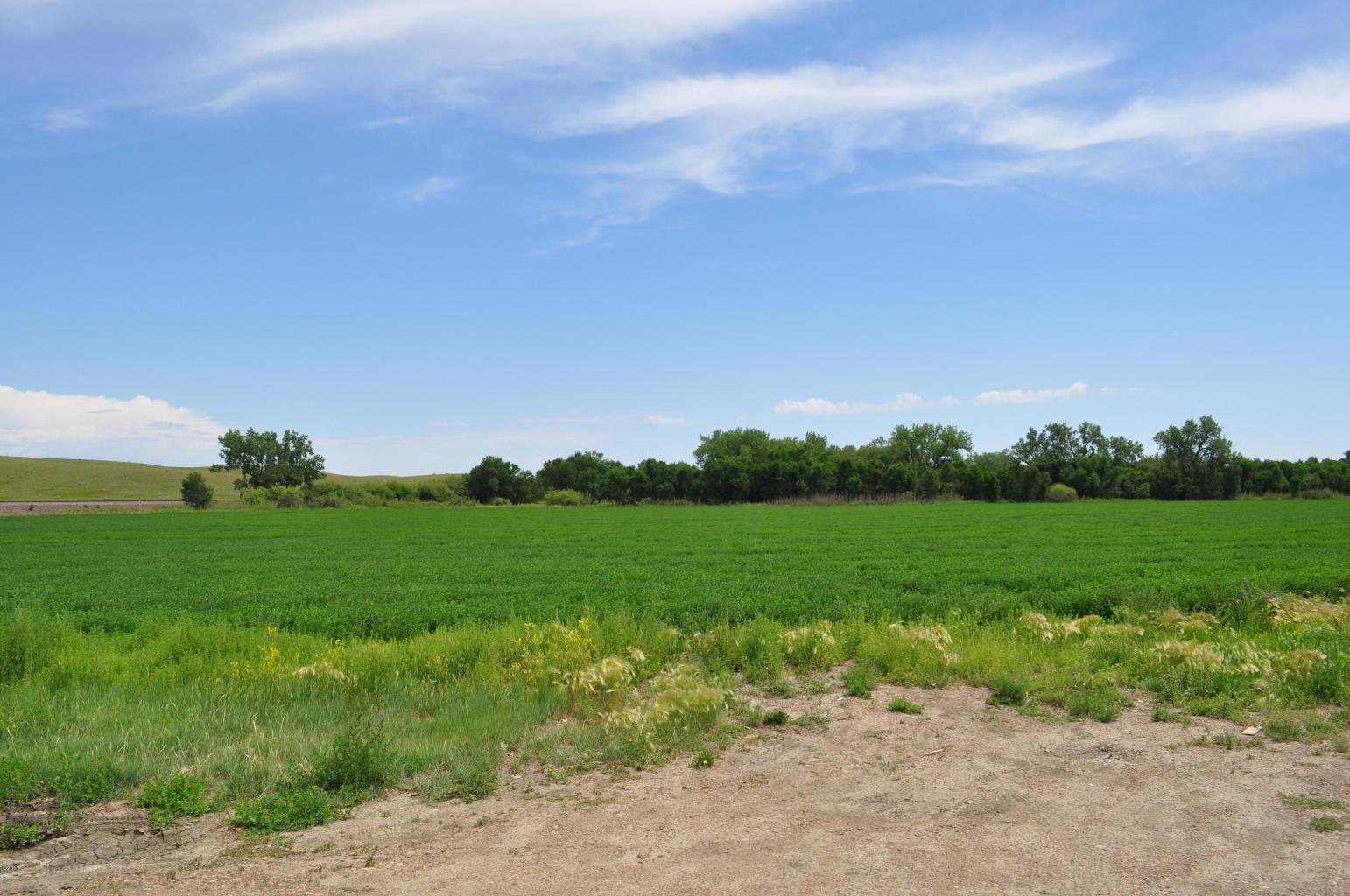 12 - Alfalfa field