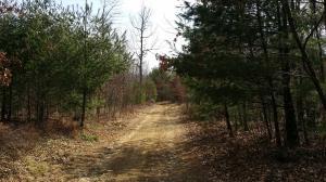 土地 为 销售 在 IRON GATE ROAD Beech Creek, 宾夕法尼亚州 16822 美国