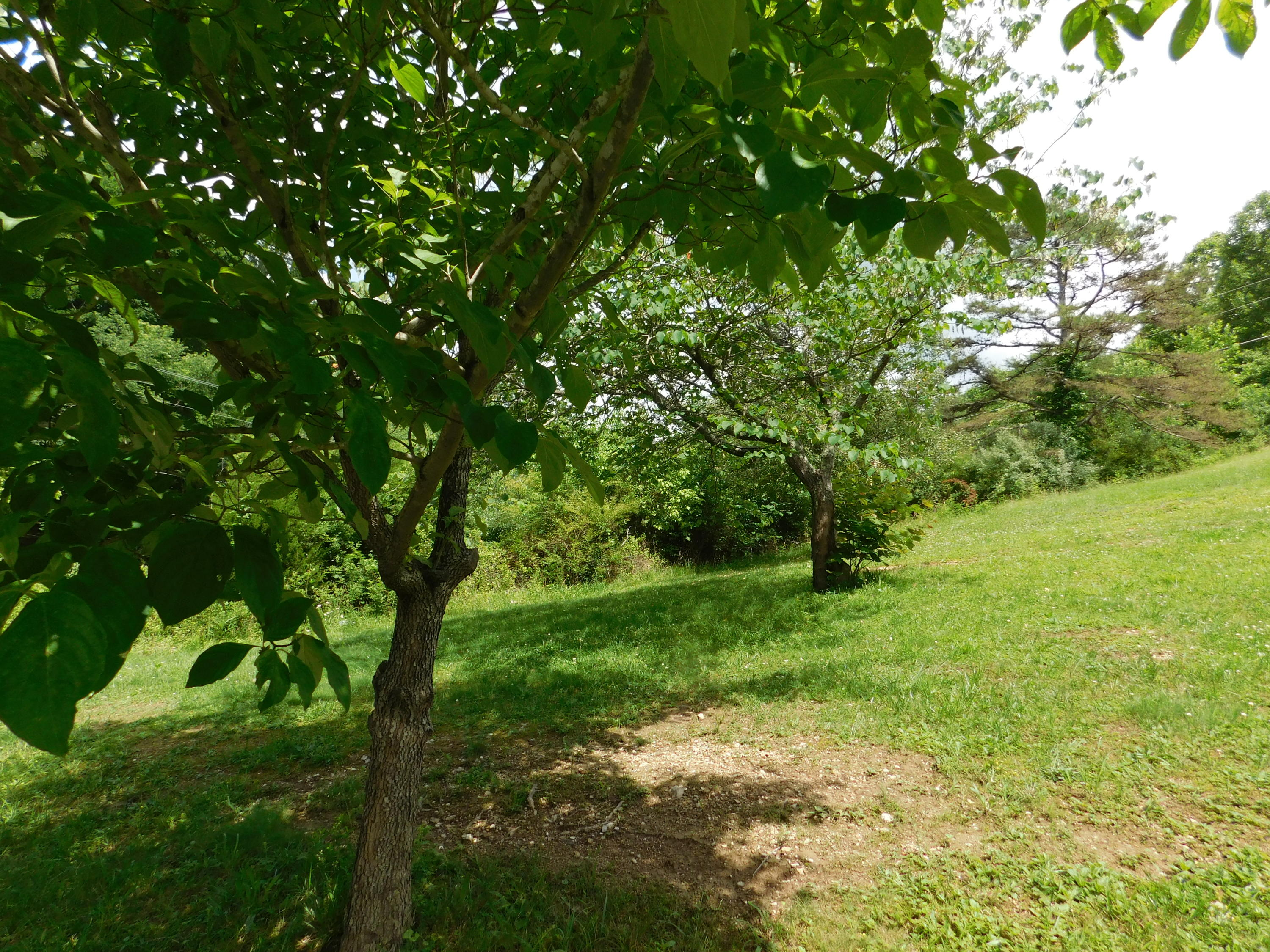 Reagan St, Harrogate, Tennessee 37752, ,Lots & Acreage,For Sale,Reagan,966857