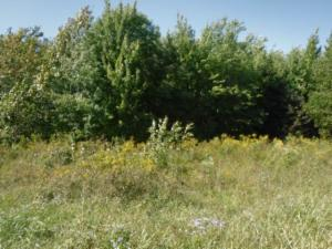 Lot 1 Airport Road, Livingston, TN 38570