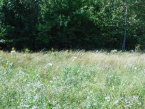 Lot 2 Airport Road, Livingston, TN 38570