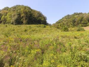 153.96 Ac. South Fork Road, Whitleyville, TN 38588