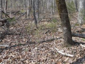 4.72 Acres Mountain Drive, Livingston, TN 38570