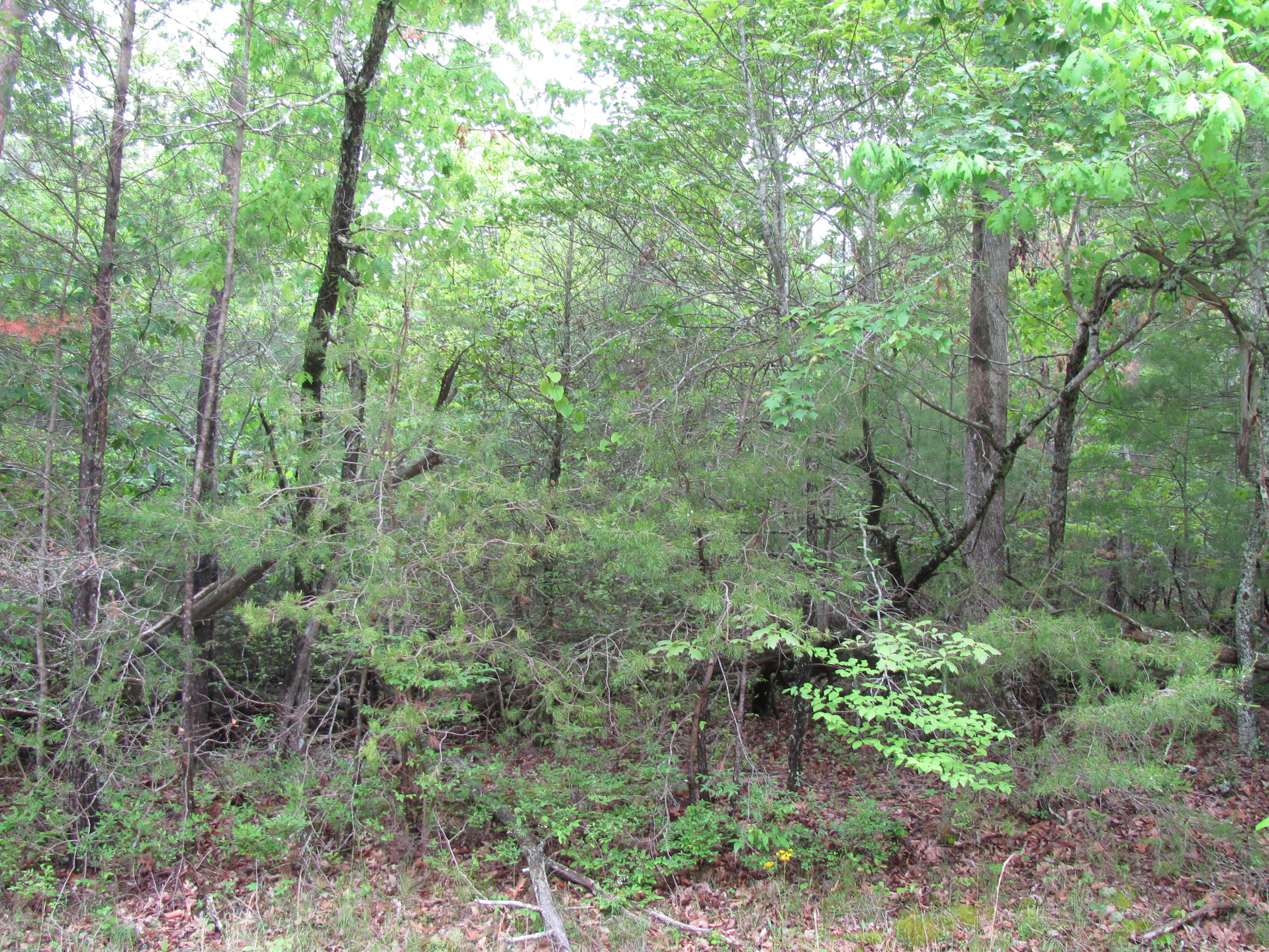 40 Holly Lane, Fairfield Glade, Tennessee 38558, ,Lots & Acreage,For Sale,Holly,1002619