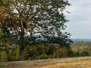 30 Acres Mountain Valley Rd, Thorn Hill, TN 37881