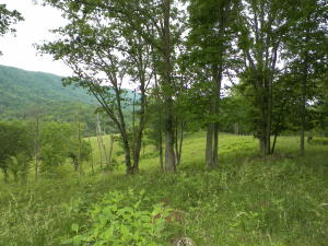 Mountain Valley Hwy 131, Thorn Hill, TN 37881