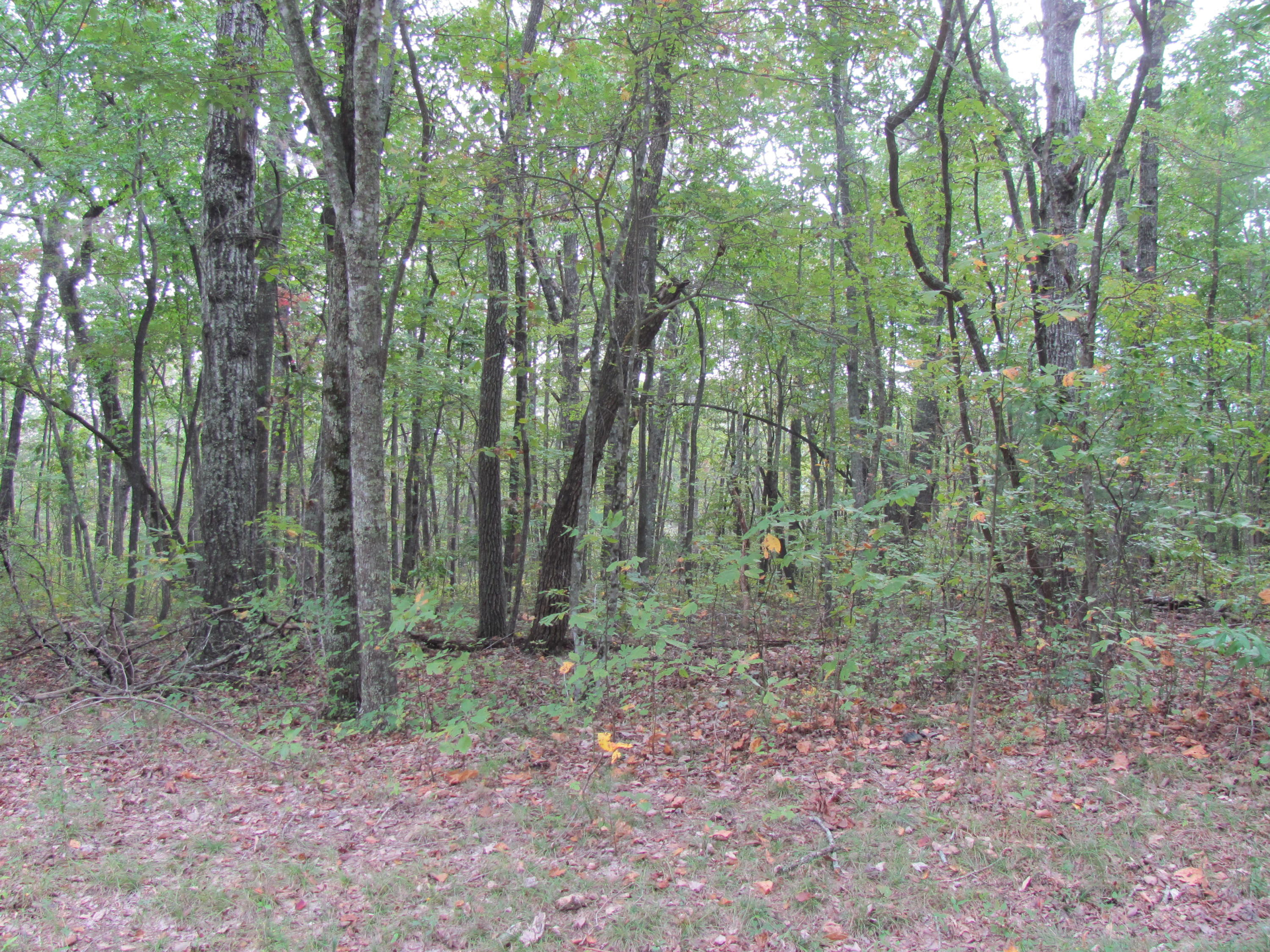 130 Liverpool, Fairfield Glade, Tennessee, United States 38558, ,Lots & Acreage,For Sale,Liverpool,1019295