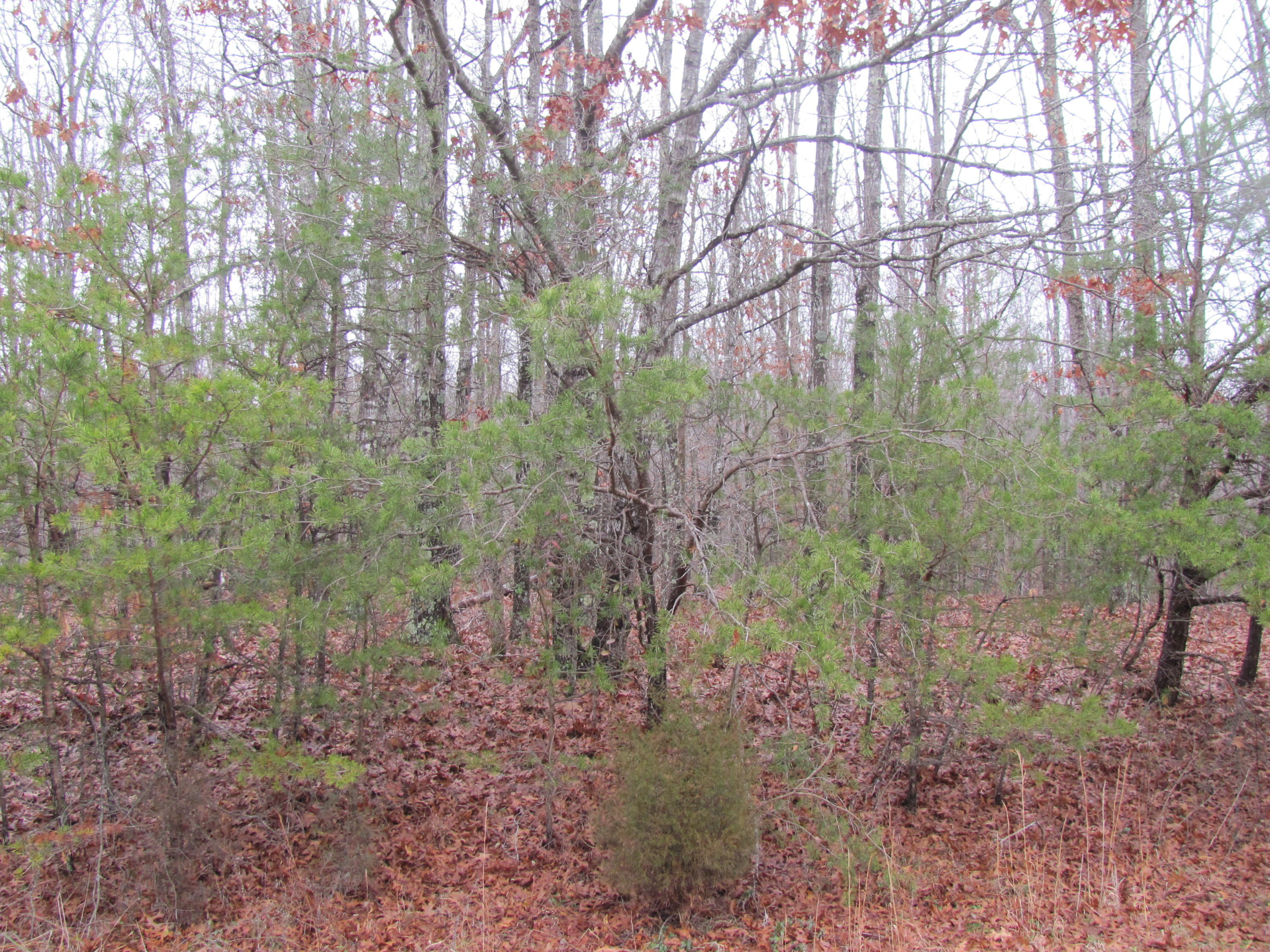 216 Malvern Rd, Fairfield Glade, Tennessee 38558, ,Lots & Acreage,For Sale,Malvern,1025665