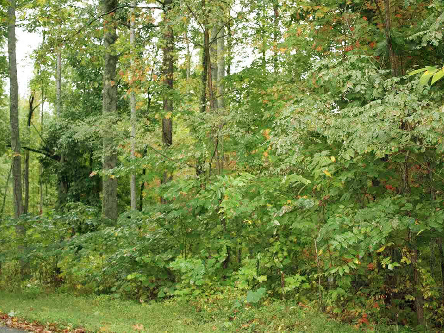 Collier, Dandridge, Tennessee, United States 37725, ,Lots & Acreage,For Sale,Collier,1035852