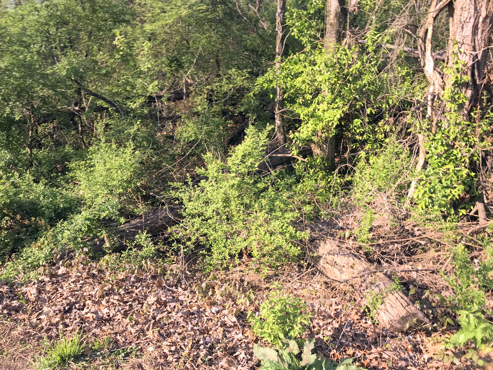 W Crestview Drive, Madisonville, Tennessee 37354, ,Lots & Acreage,For Sale,W Crestview,1037639
