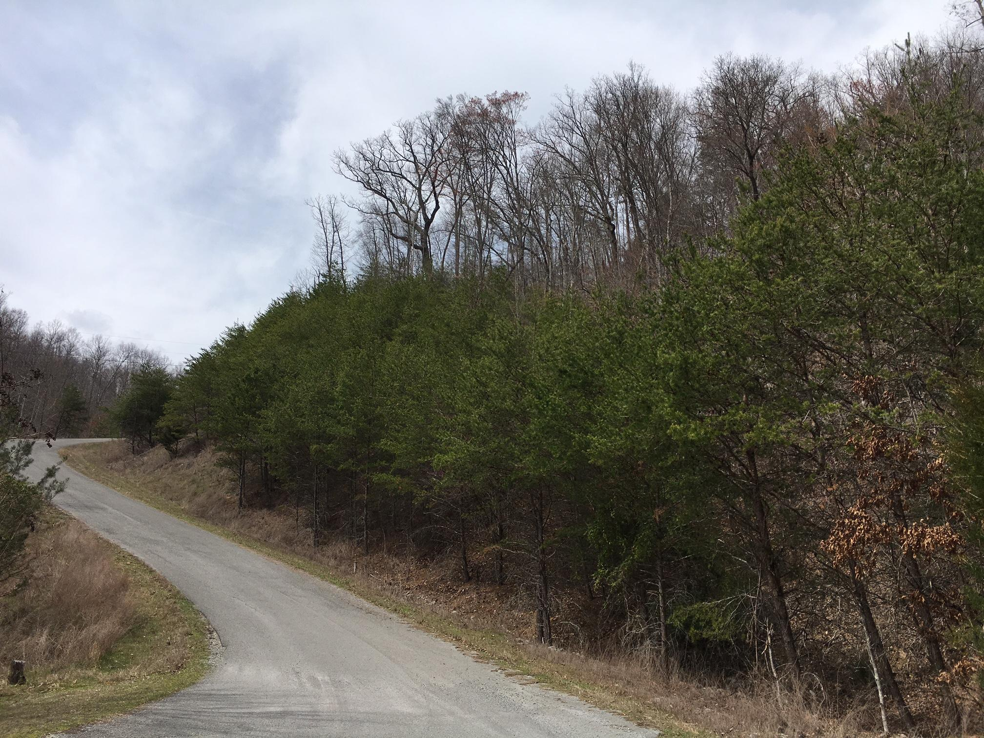 Lot 290 Bluff View Rd: