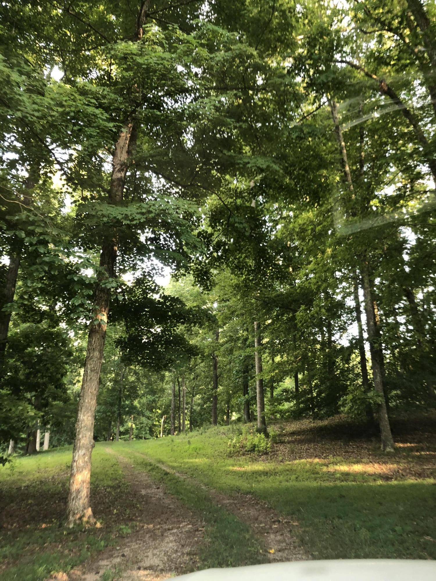 Maynardville, Maynardville, Tennessee, United States 37807, ,Lots & Acreage,For Sale,Maynardville,1046632