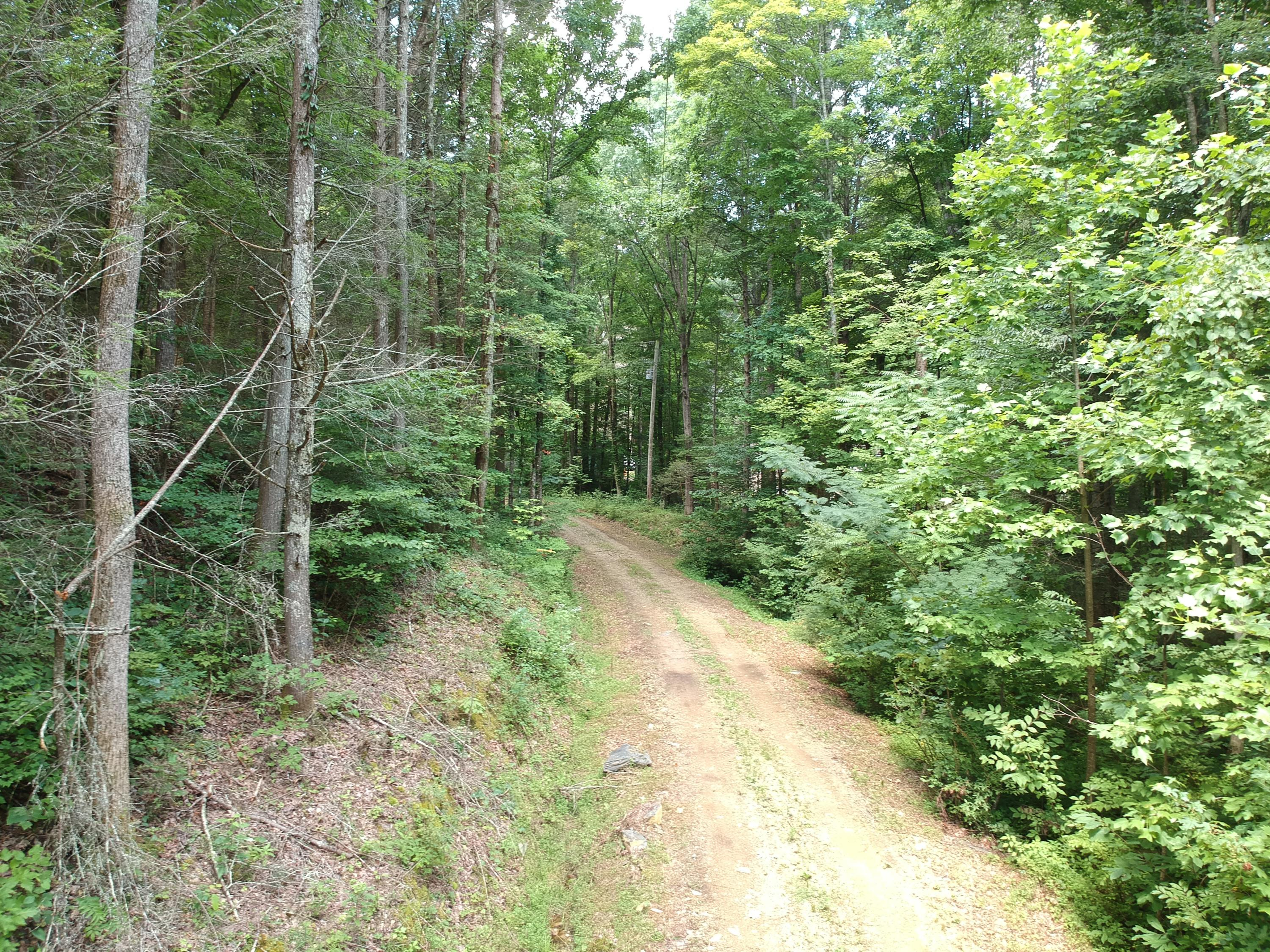1641 Old Chilhowee, Seymour, Tennessee, United States 37865, ,Lots & Acreage,For Sale,Old Chilhowee,1051428