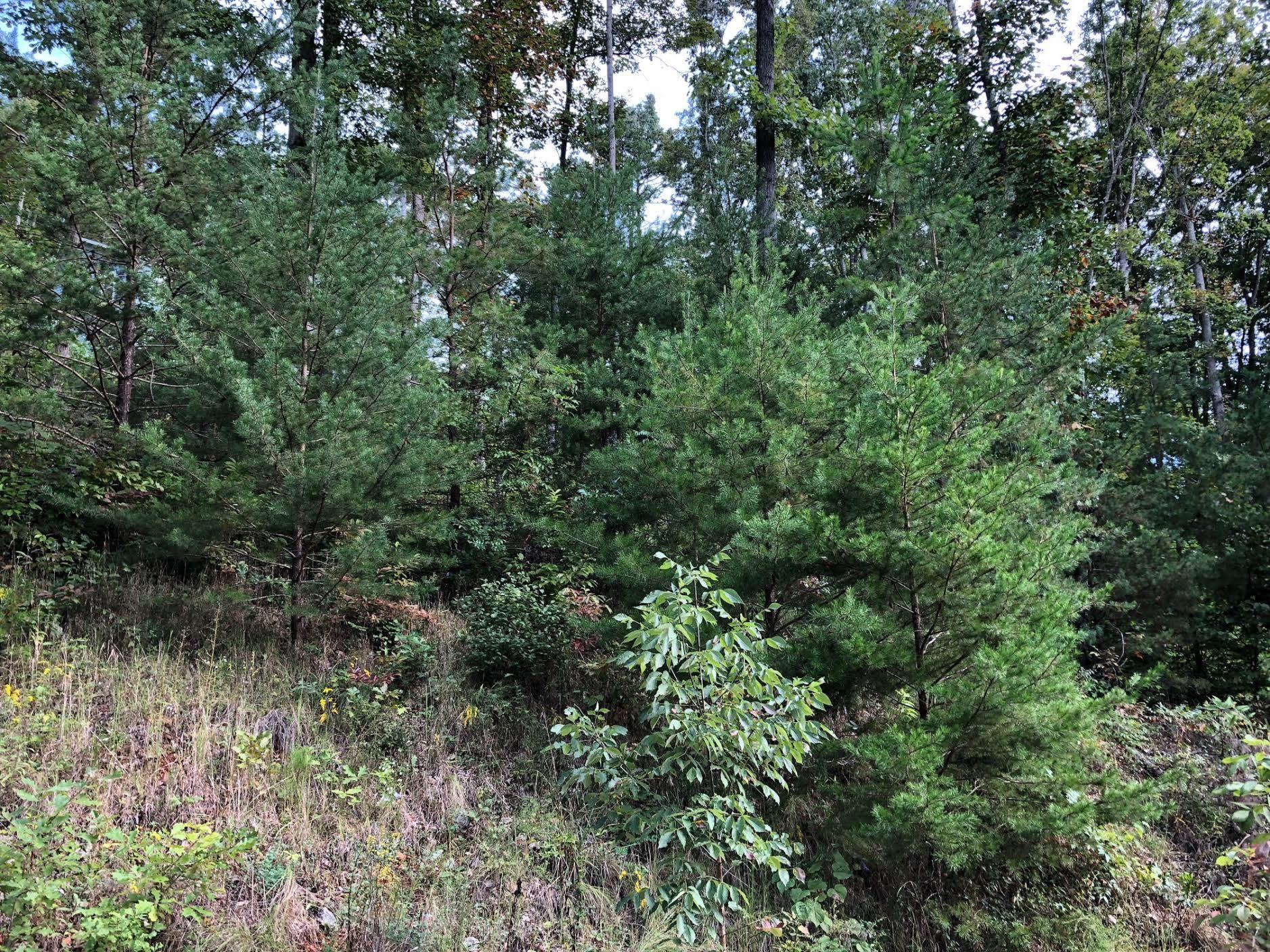 Lot 69 Waterfront Trails